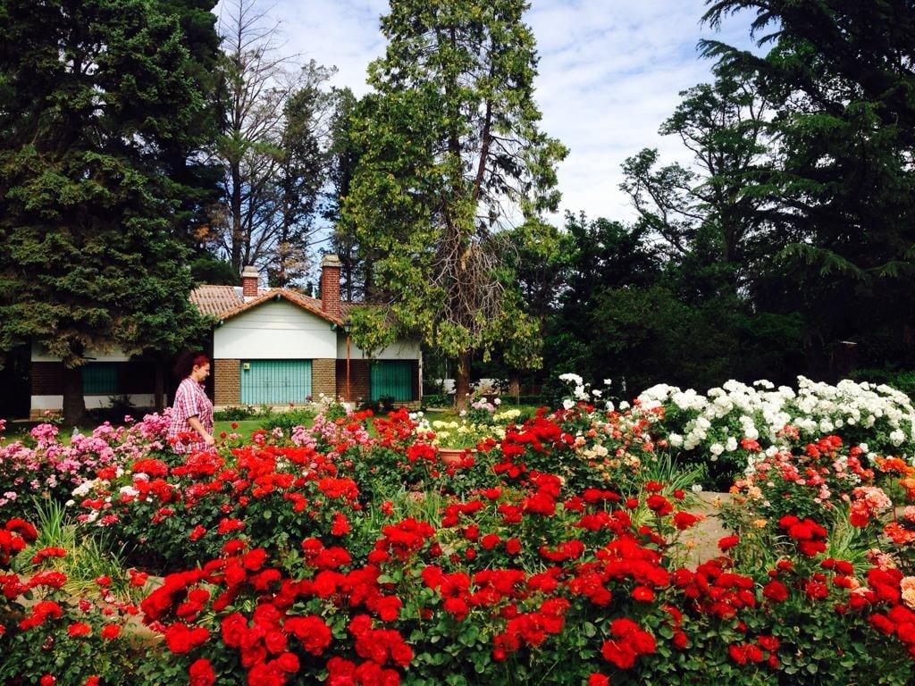 Un jardín de rosas para Rosa   Mejor Informado